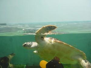 水族館 (2)